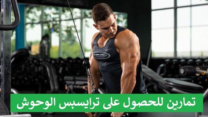 https://musclesbuilding.net/3-تمارين-للحصول-على-ترايسبس-الوحوش/