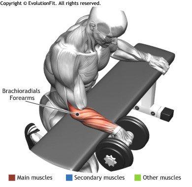 https://musclesbuilding.net/%d9%83%d9%8a%d9%81-%d8%aa%d9%84%d8%b9%d8%a8-%d8%aa%d9%85%d8%b1%d9%8a%d9%86-%d8%a7%d9%84%d9%85%d8%b9%d8%b5%d9%85-%d8%a8%d8%a7%d9%84%d8%af%d9%85%d8%a8%d9%84/