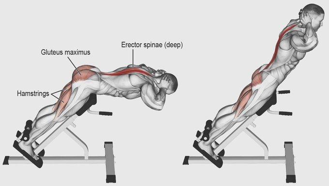 اسرار تضخيم عضلة القطنية تمارين القطنية على الجهاز