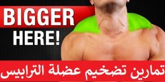 تمارين تضخيم عضلة الترابيس