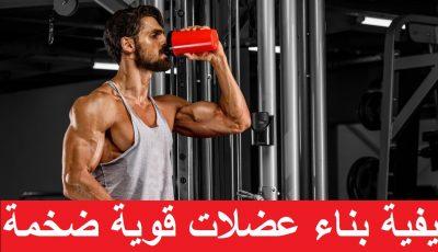 كيفية بناء عضلات قوية ضخمة